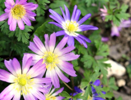 Flowers in God's Garden – Banish the Blues