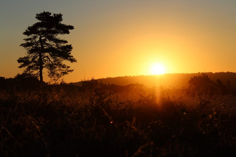 Golden sunrise on the Ashdown forest